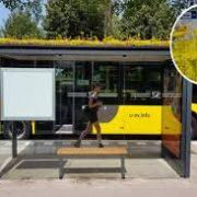 Utrecht (Olanda): tetti verdi e alveari per centinaia di pensiline degli autobus