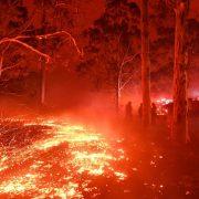 Australia, catastrofe ecologica: 480 milioni di animali e 24 persone morte negli incendi