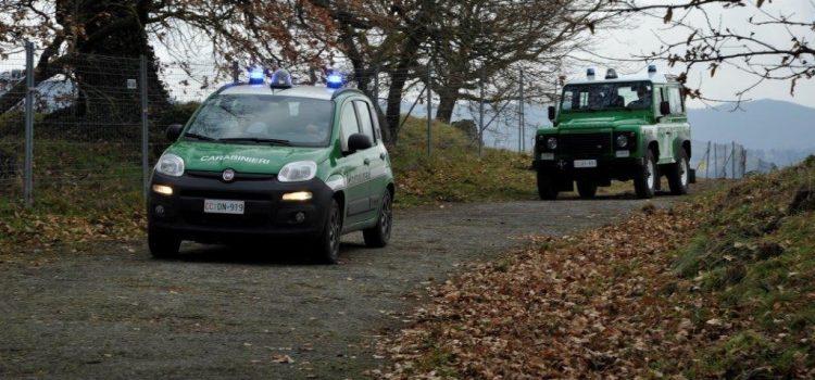 Maltrattamento e uccisione di animali: una donna denunciata dai Carabinieri Forestali