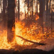 Gravissimo incendio nel Parco Nazionale del Gran Sasso (video)