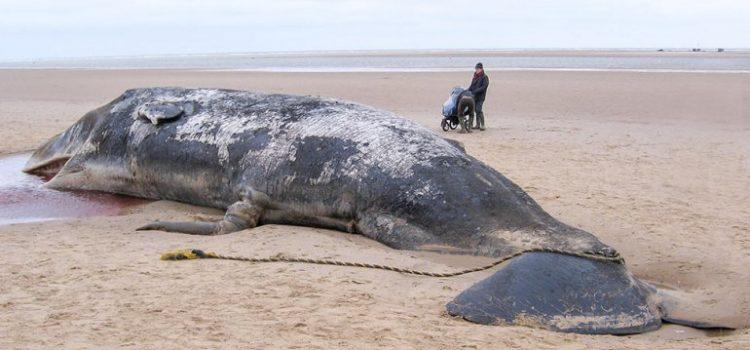 Cetacei e plastica: dieta mortale da XXI secolo